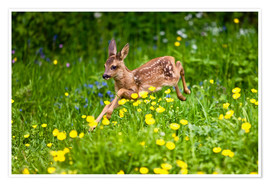 Premiumposter Roe Deer fawn running in flower meadow, Normandy