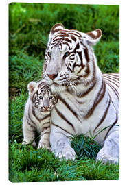 Canvastavla  White tiger mother with child - Gérard Lacz