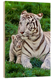 Trätavla  White tiger mother with child - Gérard Lacz