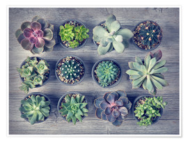 Premiumposter Different succulents above the black wooden background