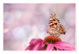 Premiumposter  Painted Lady