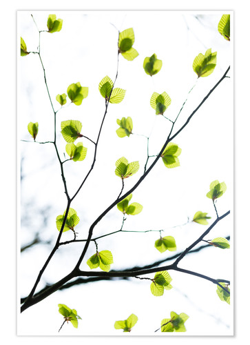 Premiumposter Signs of Spring