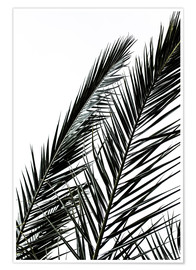 Premiumposter Palm Leaves