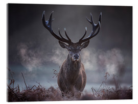 Akrylglastavla  A majestic red deer stag breathing - Alex Saberi