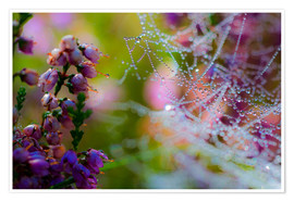 Premiumposter Morning dew on Erica and spider web