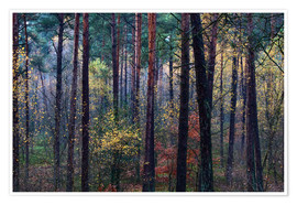 Premiumposter Colorful autumn forest