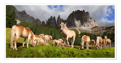 Premiumposter Haflinger horses in a meadow in front of the Rosengarten Mountains