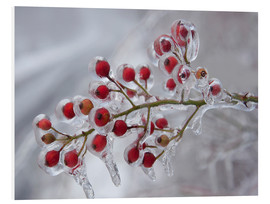 PVC-tavla  Rosehip covered with ice