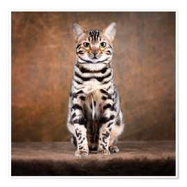 Premiumposter Proud Bengal cat
