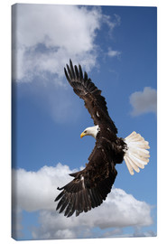 Canvastavla  Freedom on eagle wings