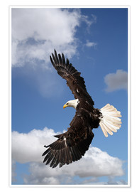 Premiumposter  Freedom on eagle wings