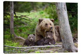 Canvastavla  Brown bear with cubs in forest