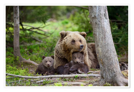 Premiumposter Brown bear with cubs in forest