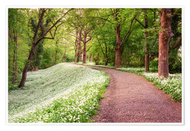 Premiumposter Forest path in spring