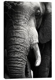 Canvastavla  Elephant in the portrait - Johan Swanepoel