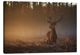 Canvastavla  Stag in autumn sunrise - Alex Saberi