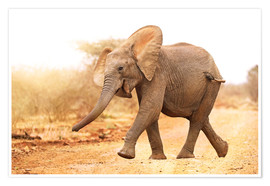 Premiumposter Happy elephant, South Africa