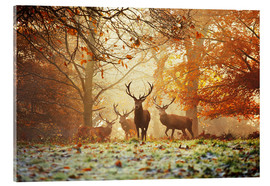 Akrylglastavla  Stags and deer in an autumn forest with mist - Alex Saberi
