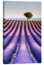 Canvastavla  Tree in a lavender field, Provence - Matteo Colombo