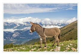 Premiumposter  Donkeys on a lonely mountain meadow
