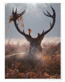Poster  Deer Stag in Winter - Alex Saberi