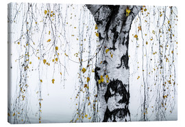 Canvastavla  Birch Tree 1 - Mareike Böhmer