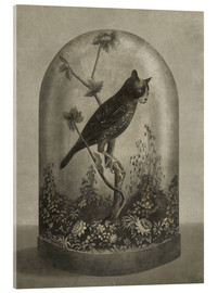 Akrylglastavla  Curiosities Cabinet Cat Owl - Terry Fan