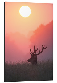 Aluminiumtavla  A male deer Stag at sunset - Alex Saberi