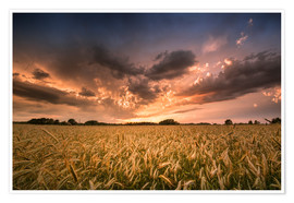 Premiumposter Grain field | After the storm