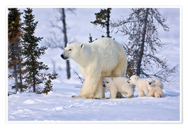 Premiumposter  Polar bear with three cubs in the tundra