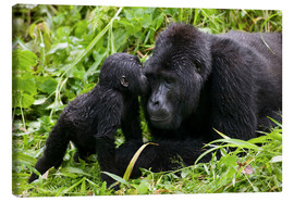 Canvastavla  Infant mountain gorilla with mother