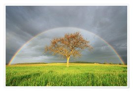 Premiumposter Meadow with rainbow in the spring