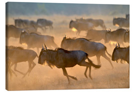 Canvastavla  Wildebeests during the great migration, Serengeti - age fotostock