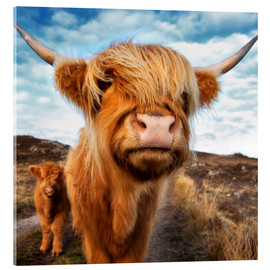 Akrylglastavla  Highland cattle with calf - Westend61
