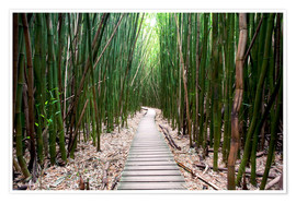 Premiumposter Trail through the bamboo forest