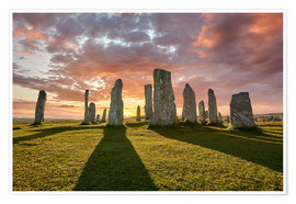Premiumposter  The plants of Callanish - age fotostock