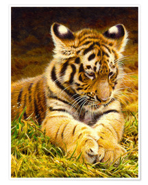 Premiumposter  Young tiger lying in grass
