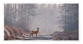 Premiumposter  Roe deer in forest