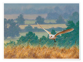 Premiumposter Barn owl in watercolor and colored pencil