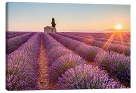 Canvastavla  Sunrise over lavender field - age fotostock
