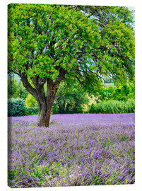 Canvastavla  Lavender field in Provence - Terry Eggers
