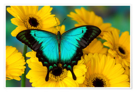 Premiumposter  Sea green swallowtail - Darrell Gulin
