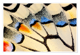 Premiumposter Detail of a butterfly wing
