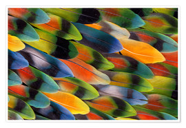 Premiumposter Colorful parrot feathers