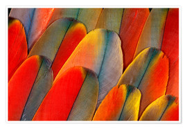 Premiumposter Plumage of a macaw