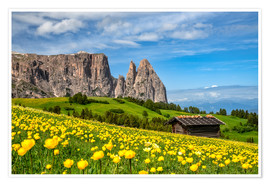 Premiumposter  Spring on the Alpe di Siusi in South Tyrol - Achim Thomae