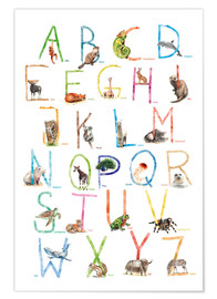 Premiumposter  Animal ABC - Nadine Conrad