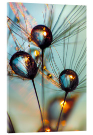 Akrylglastavla  Dandelion umbrella with large dew drops - Julia Delgado