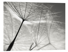 Akrylglastavla  Dandelion Umbrella in black and white - Julia Delgado