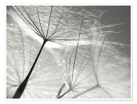 Premiumposter  Dandelion Umbrella in black and white - Julia Delgado